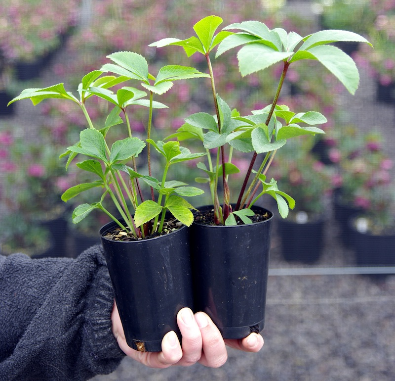 Mail order plant business for sale