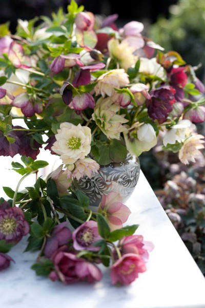 A lovely composition of Hellebore flowers taken by Simon Griffiths at Post Office Farm.